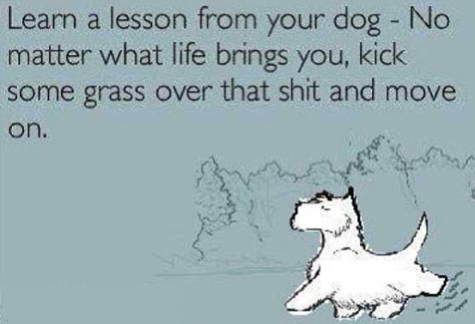 dog lesson