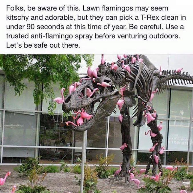 Flamingo_LawnFlamingos