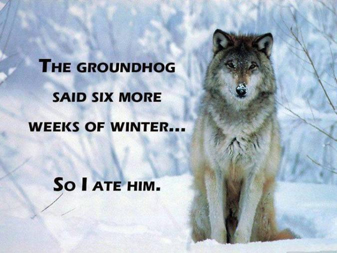 Groundhog wolf