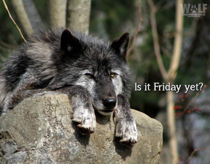Nash - wolf Friday yet