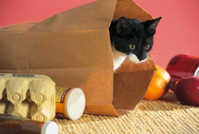 cat-bag_5